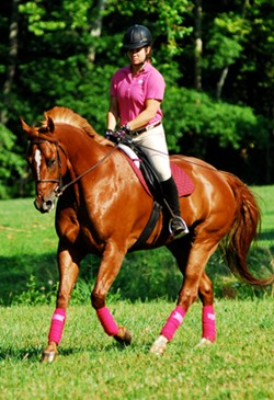Students that major in Dressage at Meredith Manor equestrian career college have 8 one hour dressage riding lessons per week in addition to 16 hours per week in training classes.