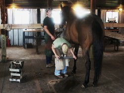 Farrier Courses taught at Meredith Manor