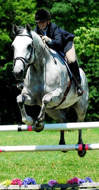 Students that major in Dressage at Meredith Manor equintrian career college have 8 one hour dressage riding lessons per week in addition to 16 hours per week in training classes.