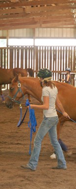 Students work on training horses at Meredith Manor, a horse training college.